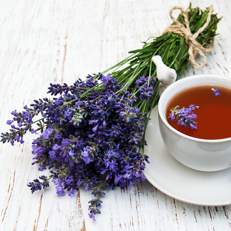 Expand your herbal education by digging deeper into Lavender.