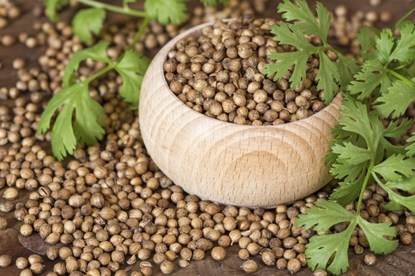 Expand your herbal education by digging deeper into Coriander.