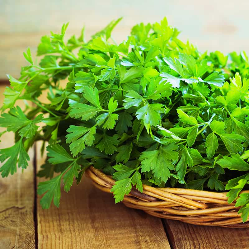 Expand your herbal education by digging deeper into Parsley.