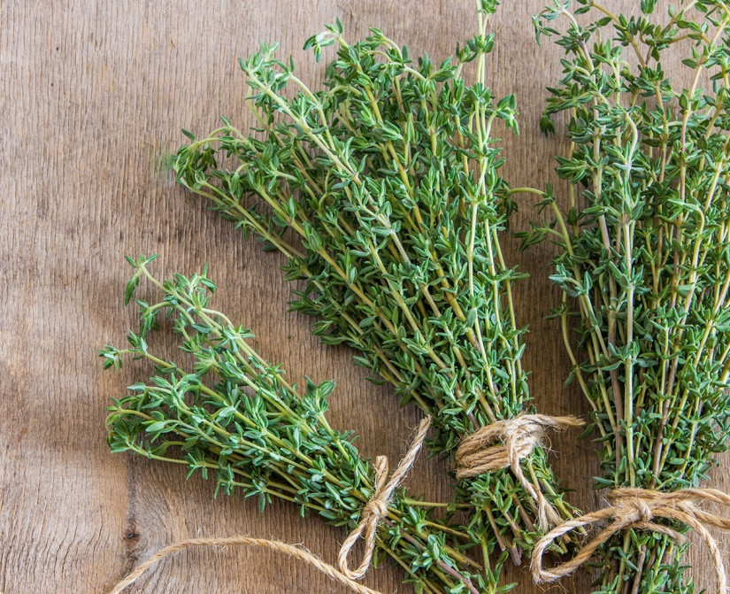 Expand your herbal education by digging deeper into Thyme.