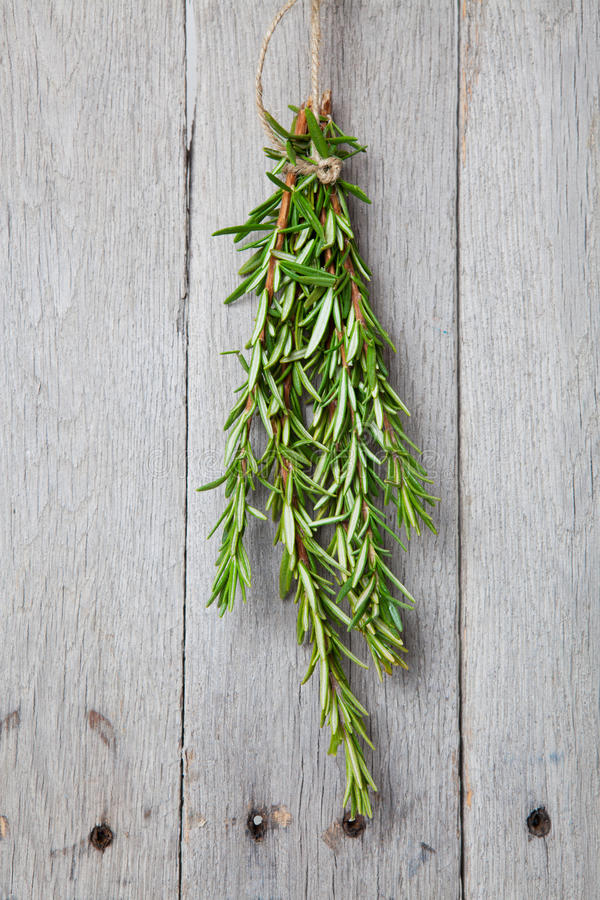 Expand your herbal education by digging deeper into Rosemary.