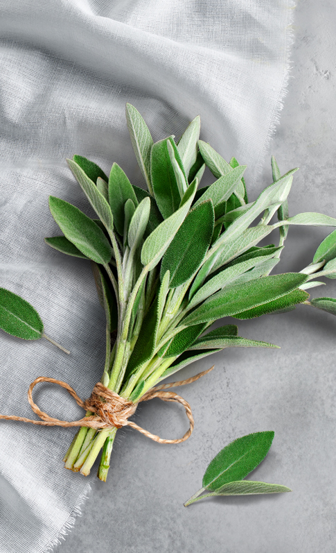 Expand your herbal education by digging deeper into Sage.