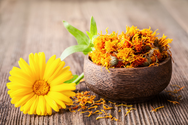 Expand your herbal education by digging deeper into Calendula.