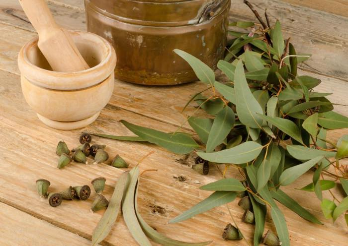 Expand your herbal education by digging deeper into Eucalyptus.