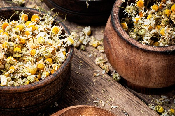Expand your herbal education by digging deeper into Chamomile.