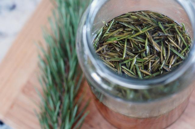Fir Tree Tea Recipes